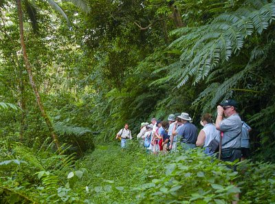 A guided tour in the Takitumu Conservation Area