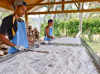 Coconut oil production at Rito Cook Islands